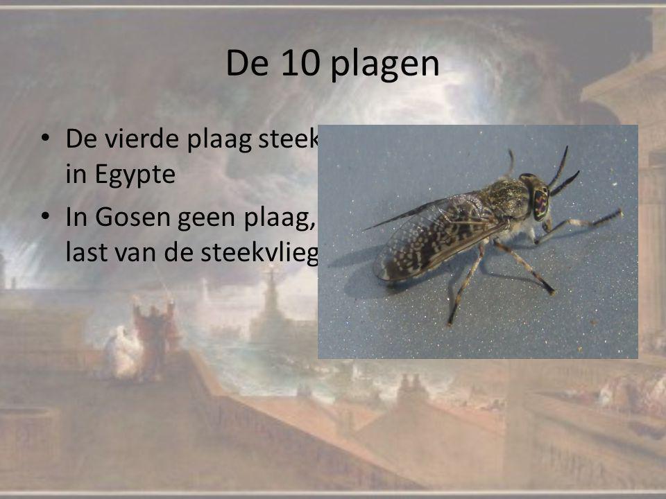 De 10 plagen De vierde plaag steekvliegen, maar nu alleen in Egypte In Gosen geen plaag, de mensen hadden geen last van de steekvliegen