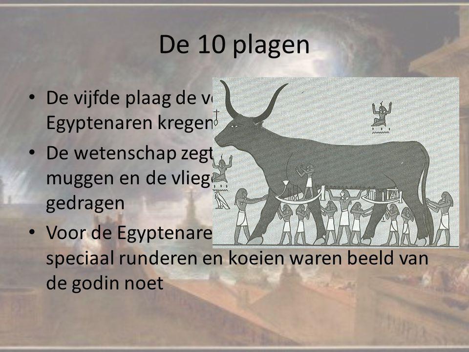 De 10 plagen De vijfde plaag de veepest, alle vee van de Egyptenaren kregen veepest De wetenschap zegt weer, logisch, want na de muggen en de vliegen