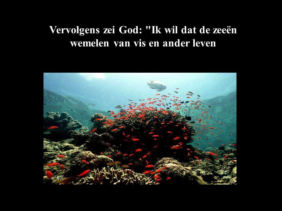Vervolgens zei God: