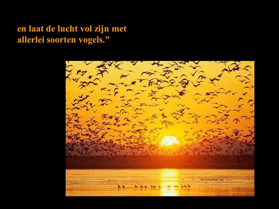 en laat de lucht vol zijn met allerlei soorten vogels.