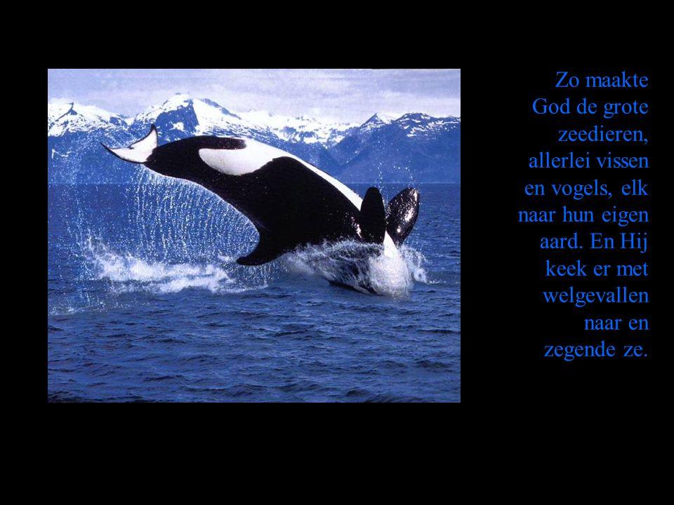 Zo maakte God de grote zeedieren, allerlei vissen en vogels, elk naar hun eigen aard. En Hij keek er met welgevallen naar en zegende ze.