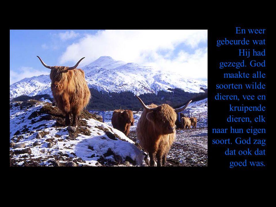 En weer gebeurde wat Hij had gezegd. God maakte alle soorten wilde dieren, vee en kruipende dieren, elk naar hun eigen soort. God zag dat ook dat goed