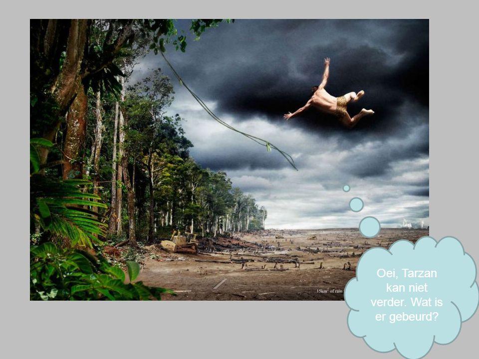 Oei, Tarzan kan niet verder. Wat is er gebeurd?
