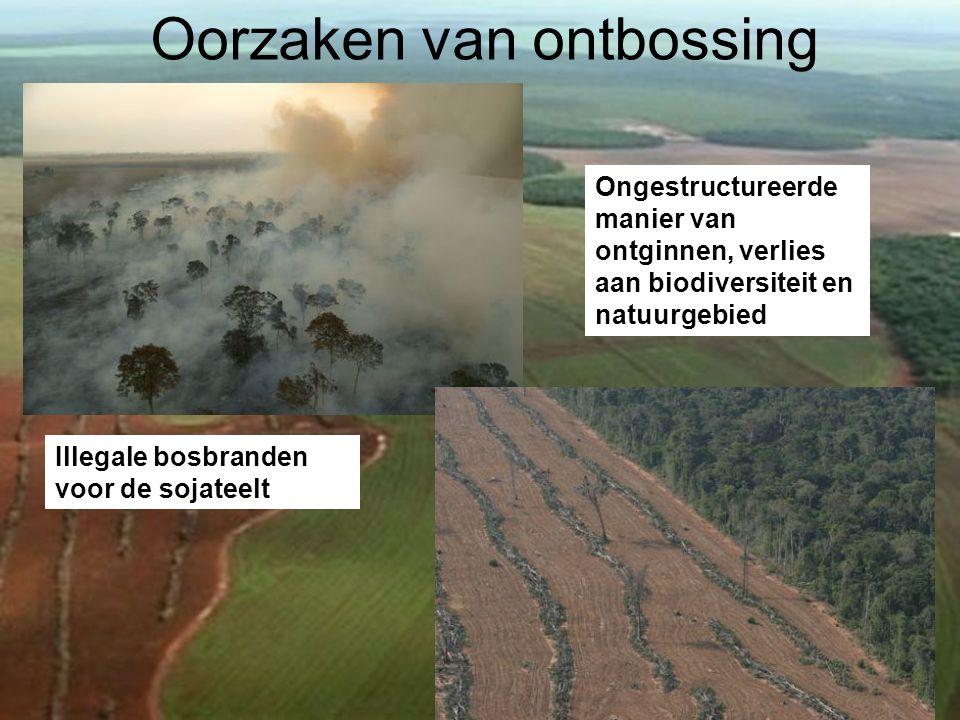 Oorzaken van ontbossing Illegale bosbranden voor de sojateelt Ongestructureerde manier van ontginnen, verlies aan biodiversiteit en natuurgebied