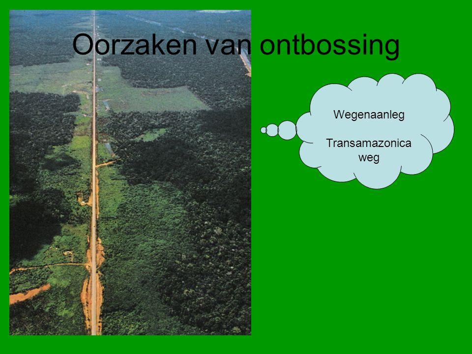 Wegenaanleg Transamazonica weg Oorzaken van ontbossing