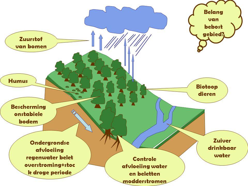 Belang van bebost gebied? Humus Biotoop dieren Zuiver drinkbaar water Controle afvloeiing water en beletten modderstromen Bescherming onstabiele bodem