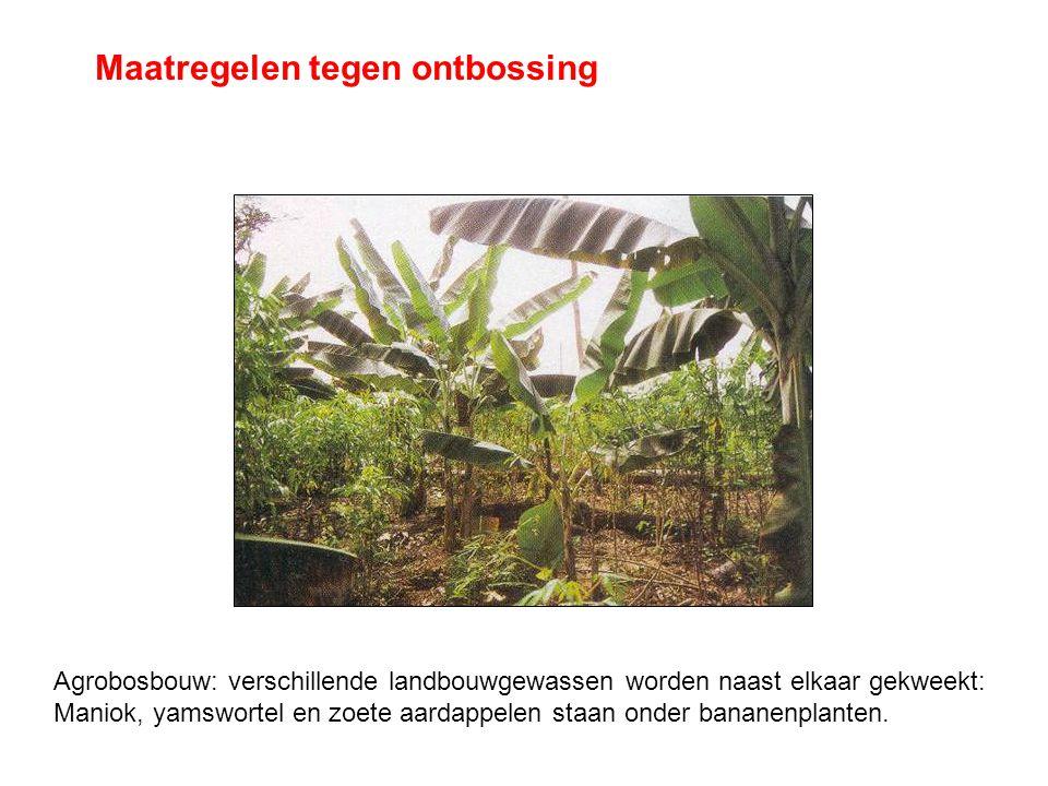 Maatregelen tegen ontbossing Agrobosbouw: verschillende landbouwgewassen worden naast elkaar gekweekt: Maniok, yamswortel en zoete aardappelen staan o
