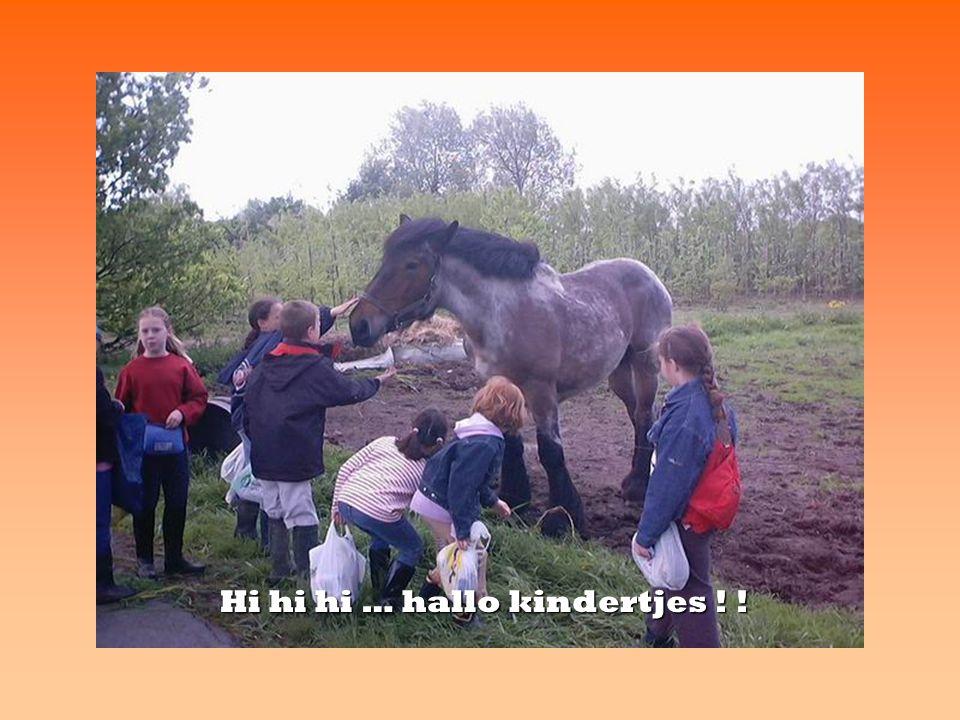 het paard: de hengst