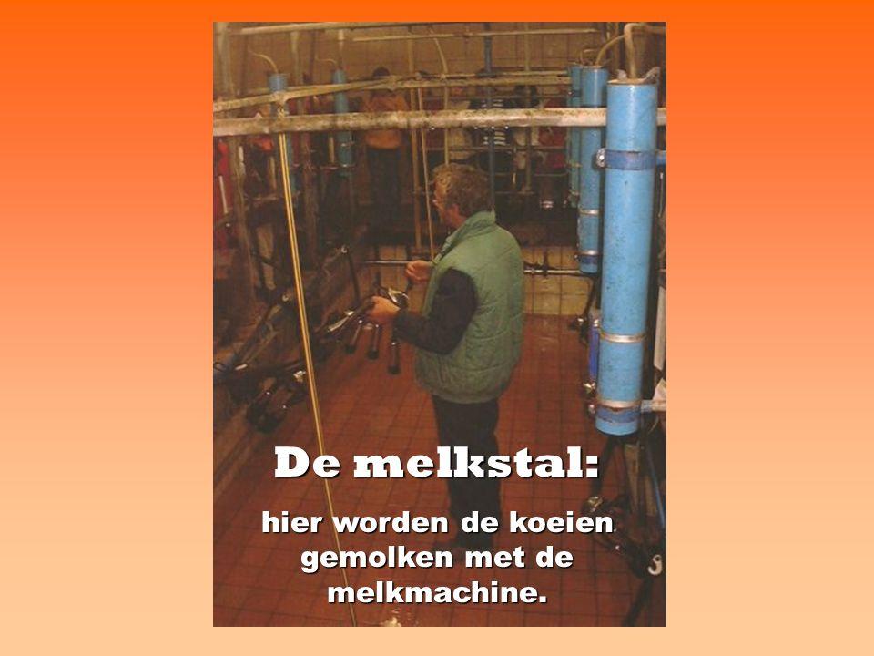 De koeltank: hierin kan de melk tot vier dagen goed bewaard worden.
