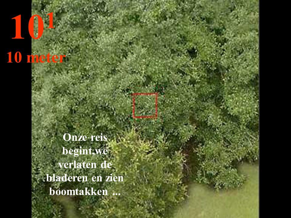 Onze reis begint,we verlaten de bladeren en zien boomtakken... 10 1 10 meter