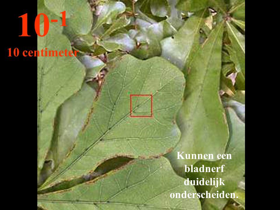 Kunnen een bladnerf duidelijk onderscheiden. 10 -1 10 centimeter