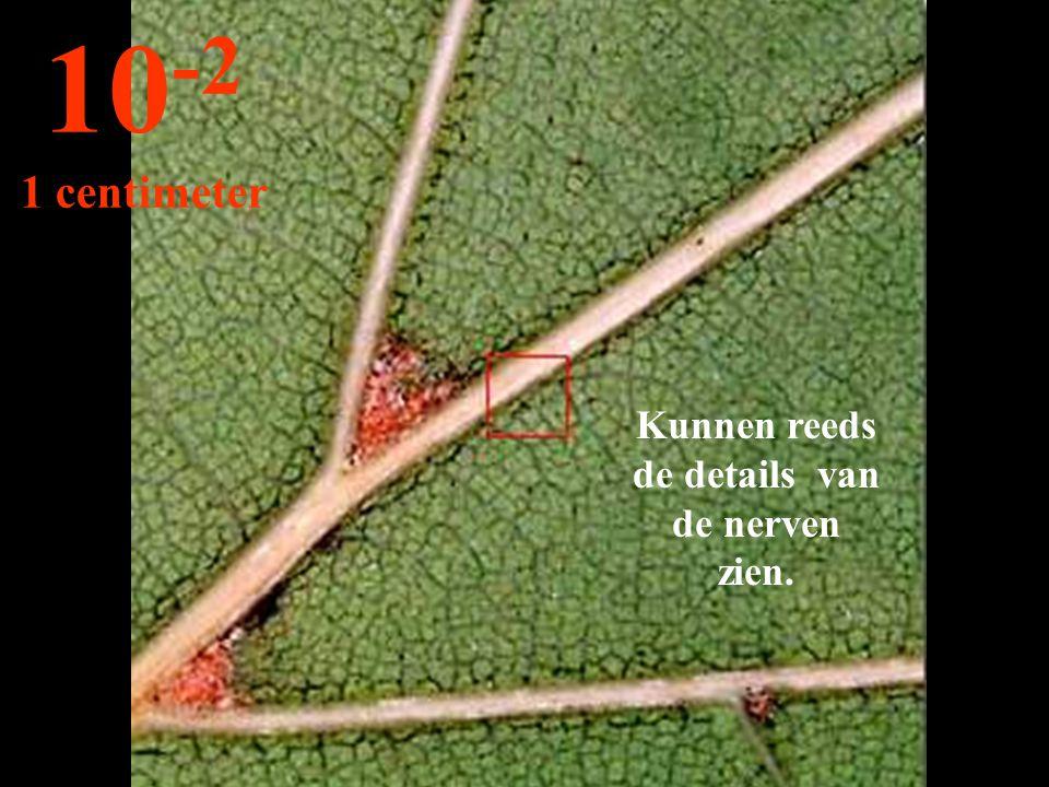 Kunnen reeds de details van de nerven zien. 10 -2 1 centimeter