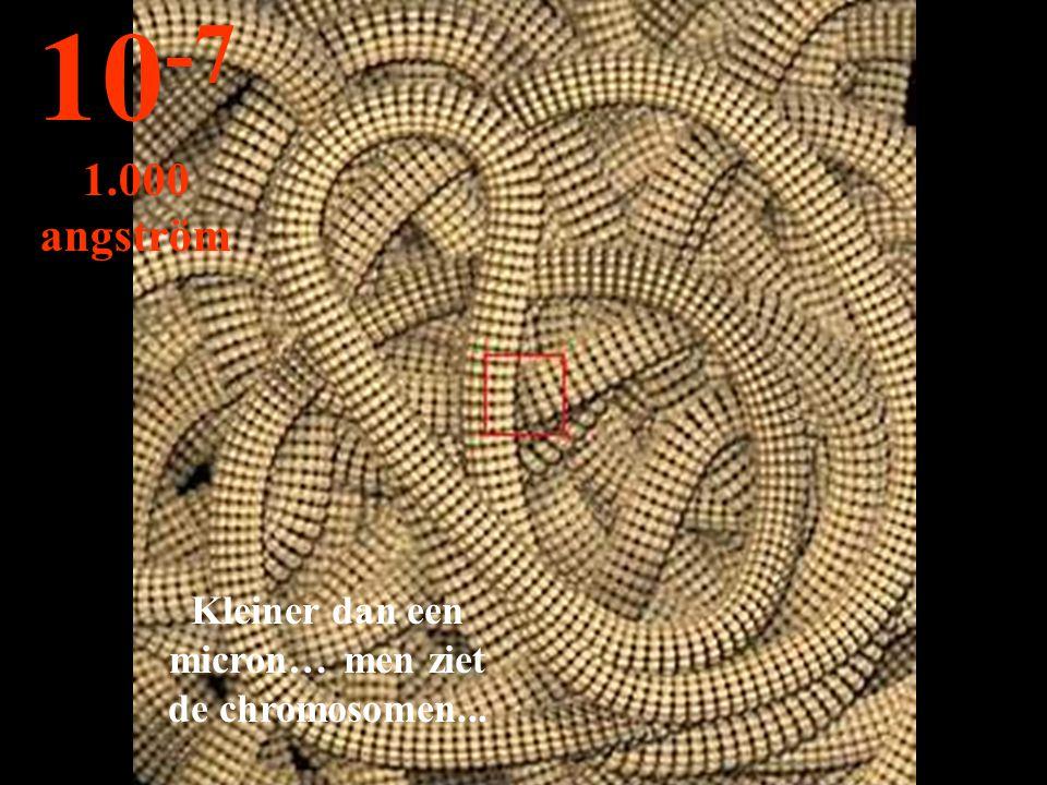 Kleiner dan een micron… men ziet de chromosomen... 10 -7 1.000 angström
