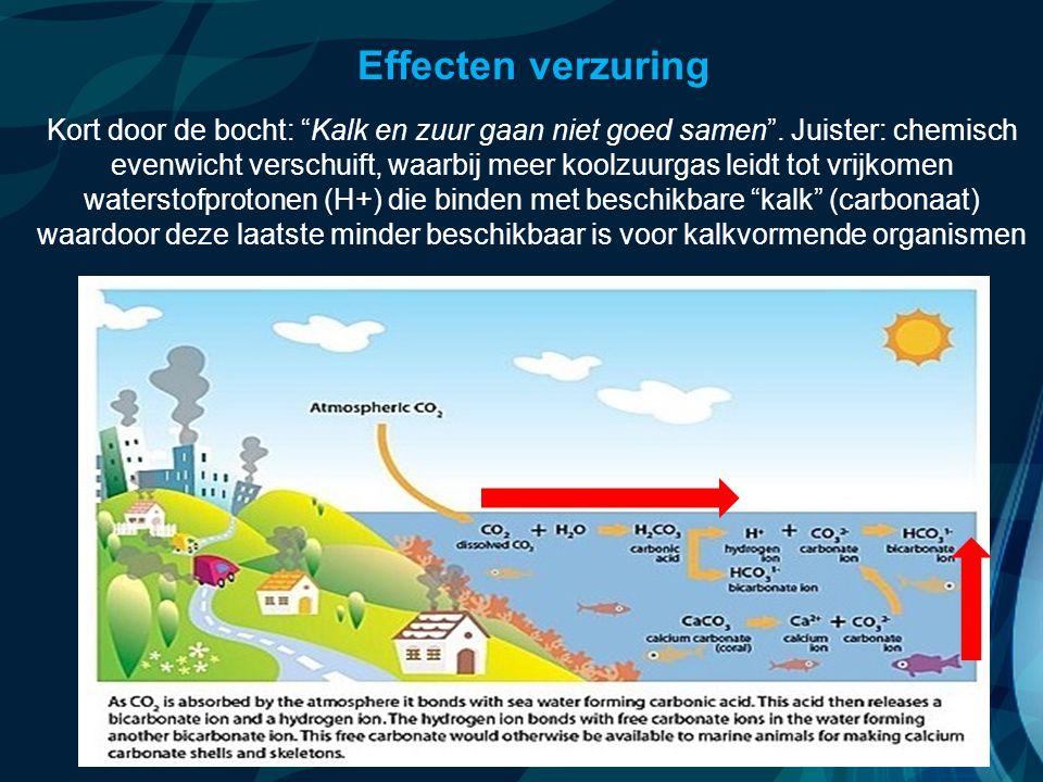 """VormingPlus Oostende 29 april 08 Effecten verzuring Kort door de bocht: """"Kalk en zuur gaan niet goed samen"""". Juister: chemisch evenwicht verschuift, w"""