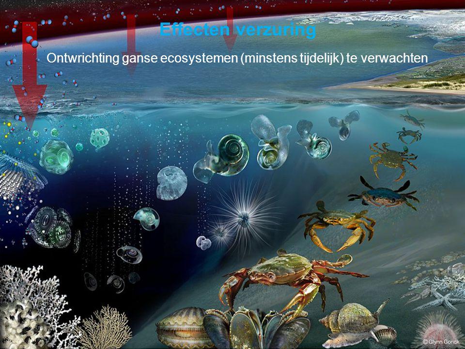 VormingPlus Oostende 29 april 08 Effecten verzuring Ontwrichting ganse ecosystemen (minstens tijdelijk) te verwachten