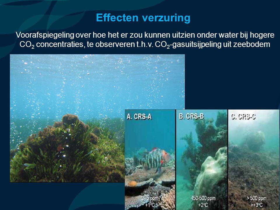 VormingPlus Oostende 29 april 08 Effecten verzuring Voorafspiegeling over hoe het er zou kunnen uitzien onder water bij hogere CO 2 concentraties, te