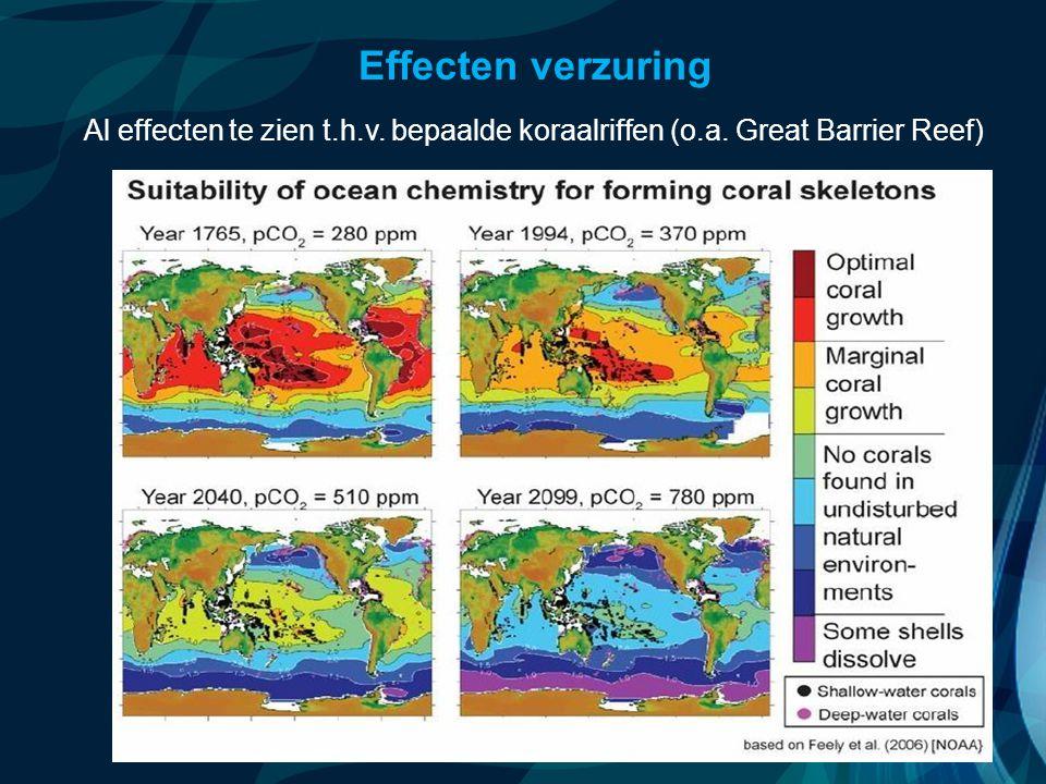VormingPlus Oostende 29 april 08 Effecten verzuring Al effecten te zien t.h.v. bepaalde koraalriffen (o.a. Great Barrier Reef)