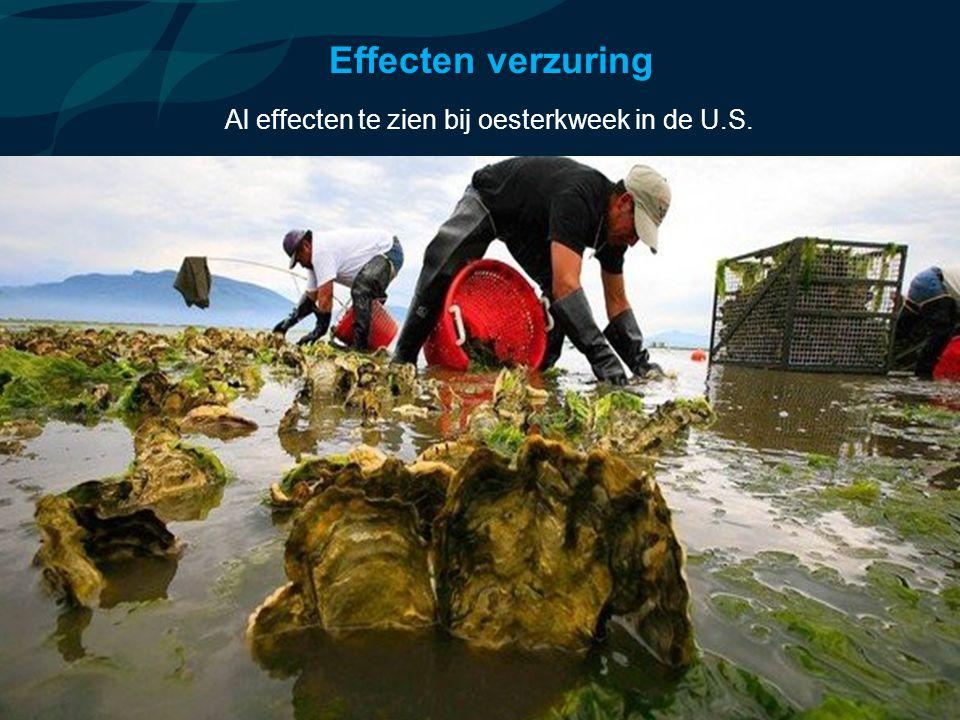 VormingPlus Oostende 29 april 08 Effecten verzuring Al effecten te zien bij oesterkweek in de U.S.