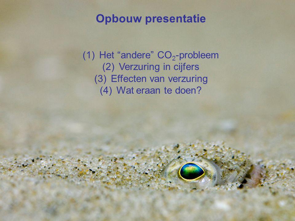 """VormingPlus Oostende 29 april 08 Steenbolk zeepaardjes Warmwatersoorten nemen toe Zeeleven verhuist Kleine heremietskreeft Opbouw presentatie (1)Het """""""
