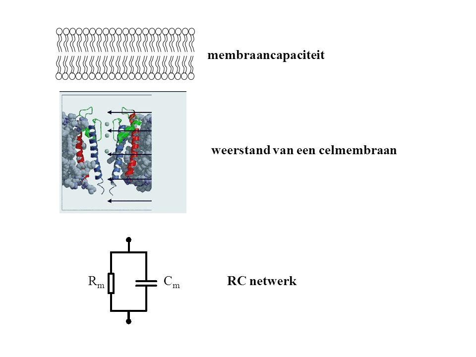 RmRm CmCm membraancapaciteit weerstand van een celmembraan RC netwerk
