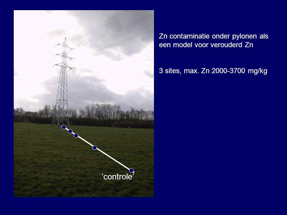 Zn contaminatie onder pylonen als een model voor verouderd Zn 3 sites, max.