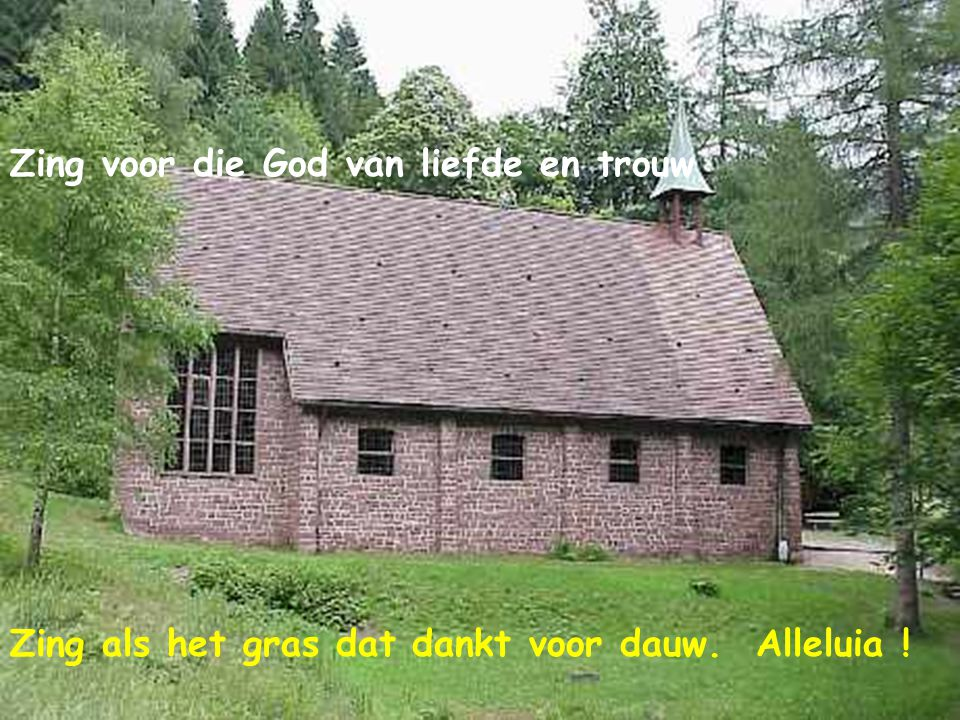 Zing voor die God van liefde en trouw Zing als het gras dat dankt voor dauw. Alleluia !