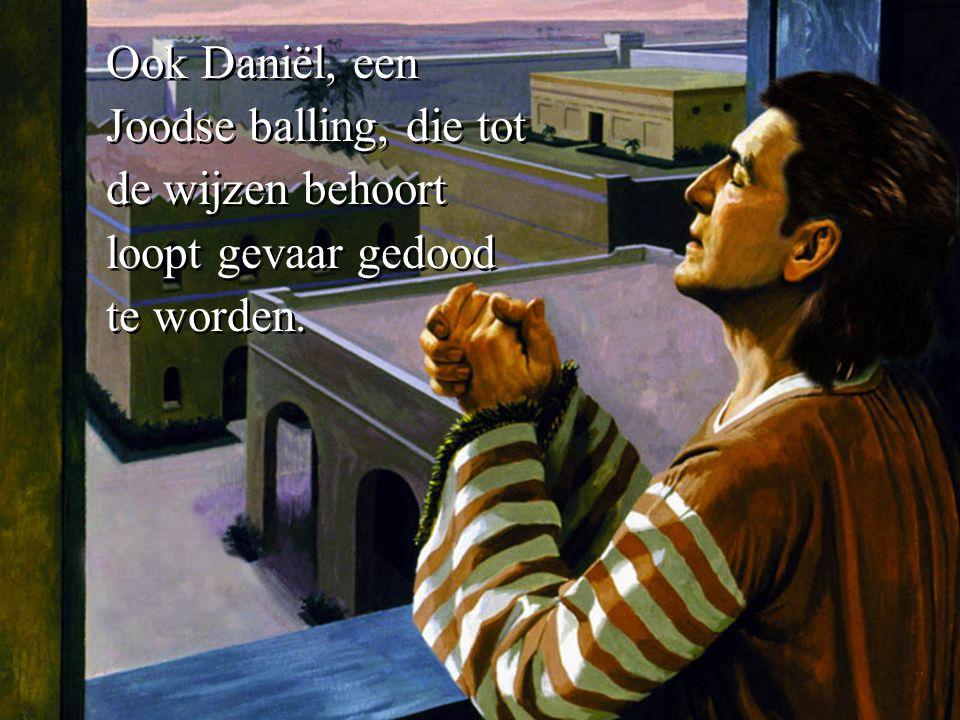 Ook Daniël, een Joodse balling, die tot de wijzen behoort loopt gevaar gedood te worden.