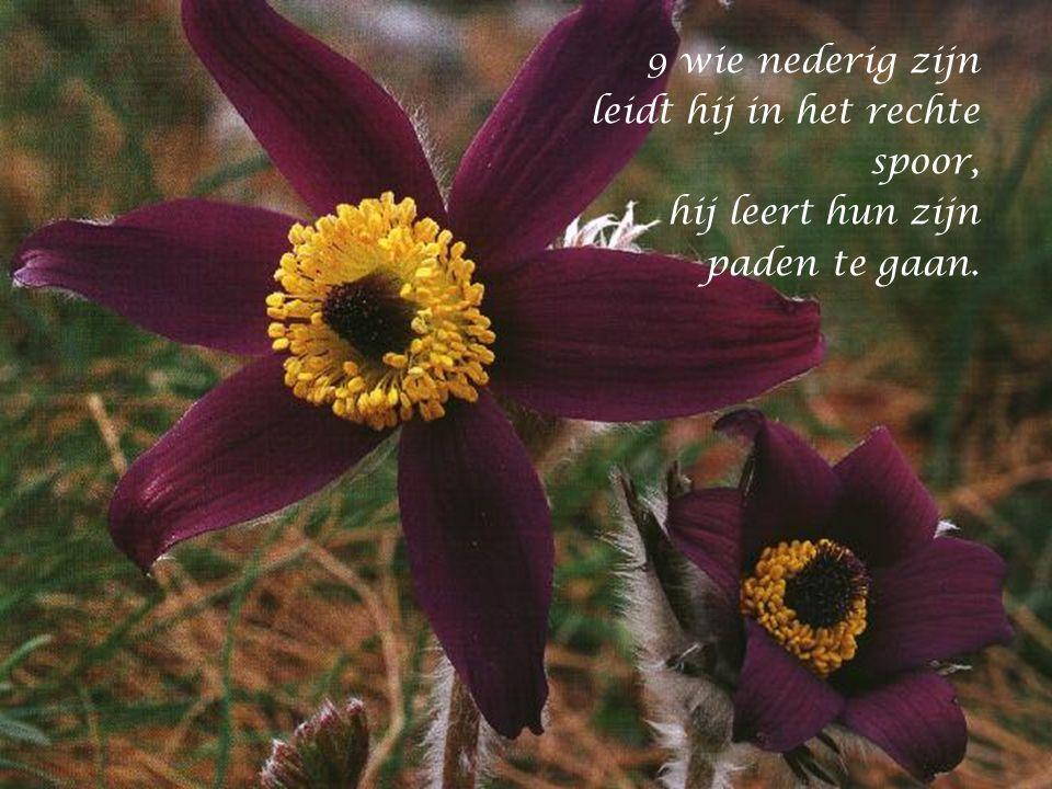 8 Goed en rechtvaardig is de HEER: hij wijst zondaars de weg,