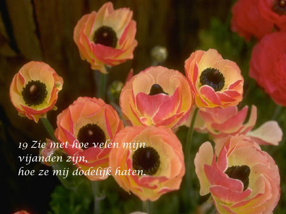18 Zie mij in mijn nood, in mijn ellende, vergeef mij al mijn zonden.