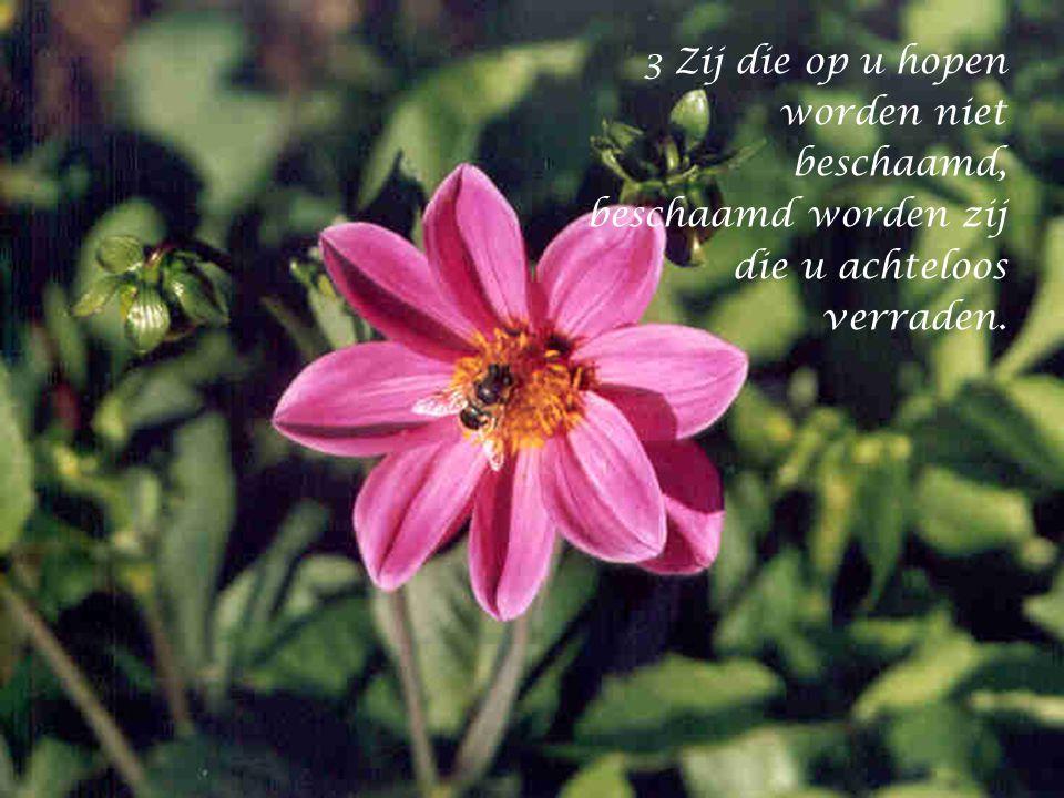 2 mijn God, op u vertrouw ik, maak mij niet te schande, laat mijn vijanden niet triomferen.
