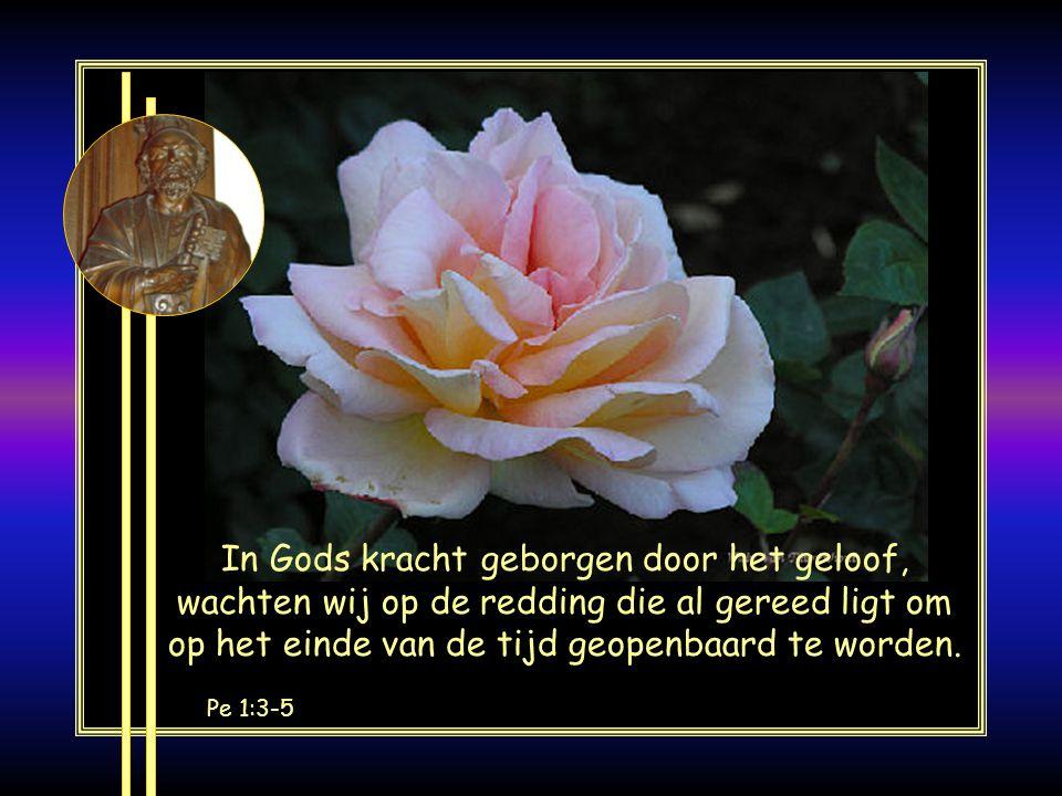 U bent een heilig volk dat Pe 2:9 om de daden te verkondigen van Hem die U uit de duisternis heeft geroepen tot zijn wonderlijk licht: Zijn bijzondere