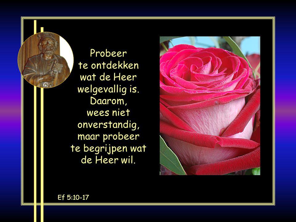 EF 2:19-20 U bent geen vreemdelingen meer, maar medeburgers en huisgenoten van God, gebouwd op het fundament van de apostelen en profeten, waarvan Chr