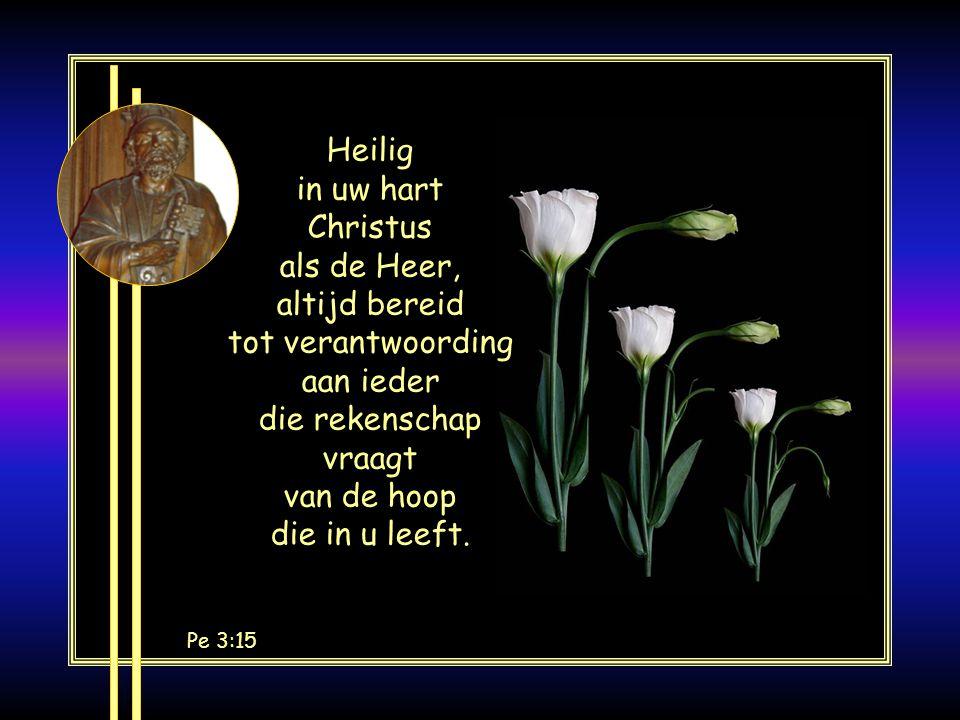 EF 2:19-20 U bent geen vreemdelingen meer, maar medeburgers en huisgenoten van God, gebouwd op het fundament van de apostelen en profeten, waarvan Christus Jezus zelf de hoeksteen is.
