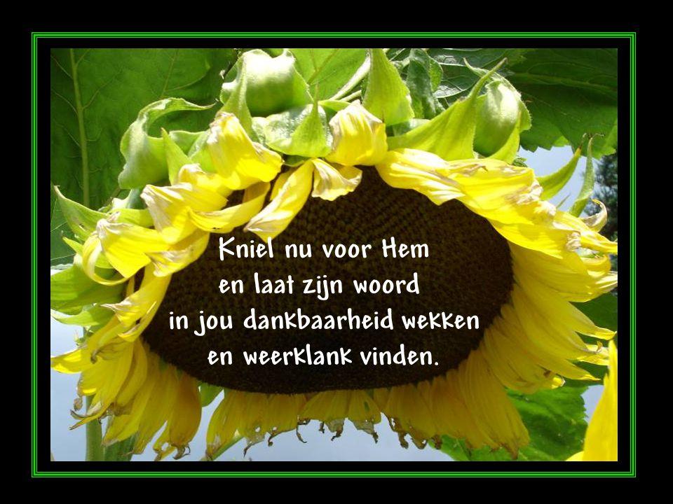 Ga in geloof en vertrouwen en sluit de liefde niet weg uit je hart Geloof zijn woord Want Hij is liefde en jij bent tot liefde geroepen