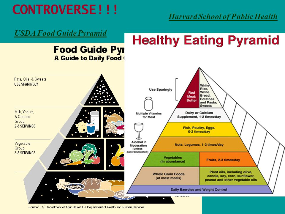 USDA Food Guide Pyramid Harvard School of Public Health CONTROVERSE!!!