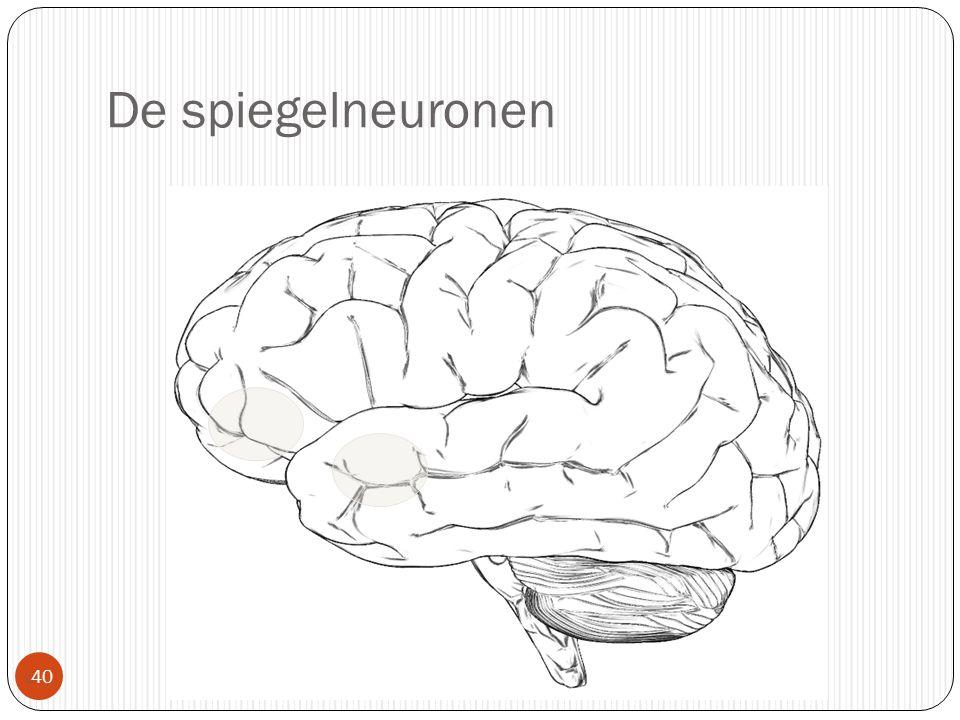 De spiegelneuronen  40