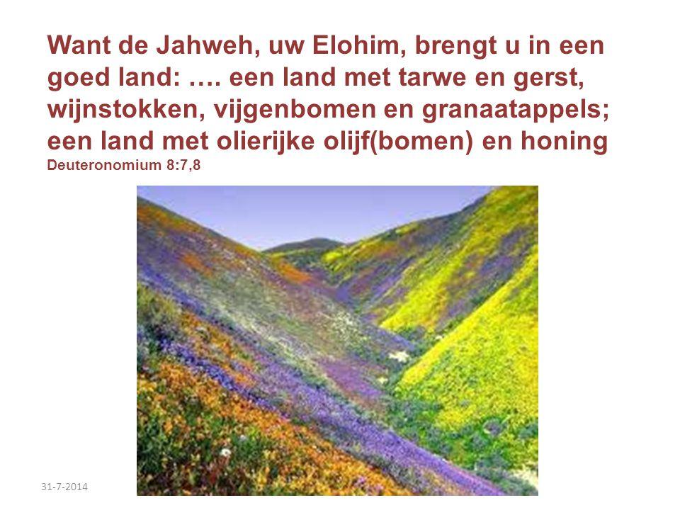 31-7-2014 Want de Jahweh, uw Elohim, brengt u in een goed land: …. een land met tarwe en gerst, wijnstokken, vijgenbomen en granaatappels; een land me
