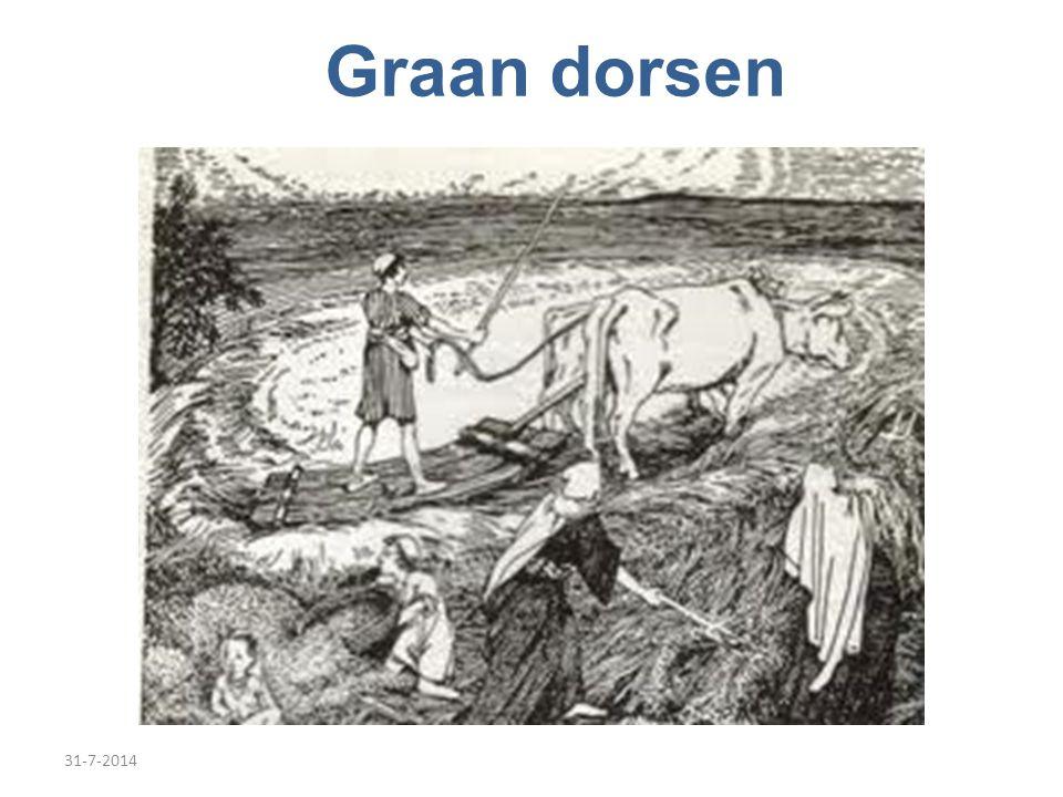 31-7-2014 Graan dorsen