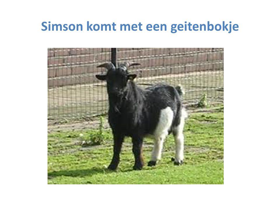 Simson komt met een geitenbokje