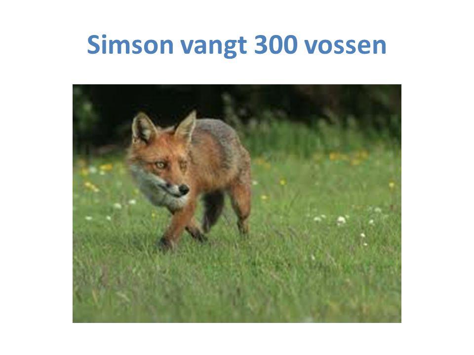 Simson vangt 300 vossen