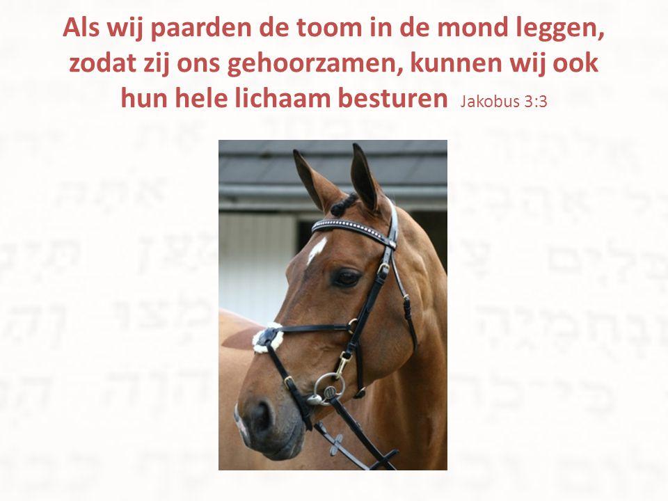 Als wij paarden de toom in de mond leggen, zodat zij ons gehoorzamen, kunnen wij ook hun hele lichaam besturen Jakobus 3:3
