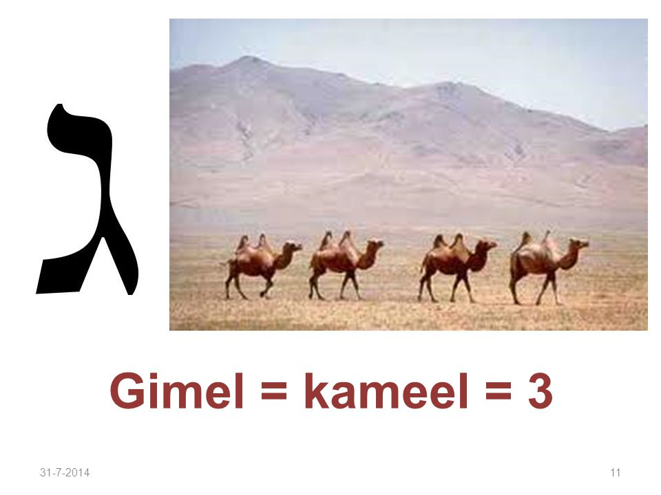 31-7-201411 Gimel = kameel = 3