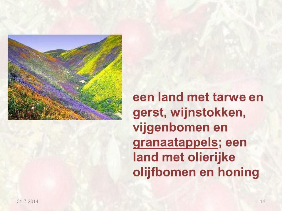 31-7-201414 een land met tarwe en gerst, wijnstokken, vijgenbomen en granaatappels; een land met olierijke olijfbomen en honing