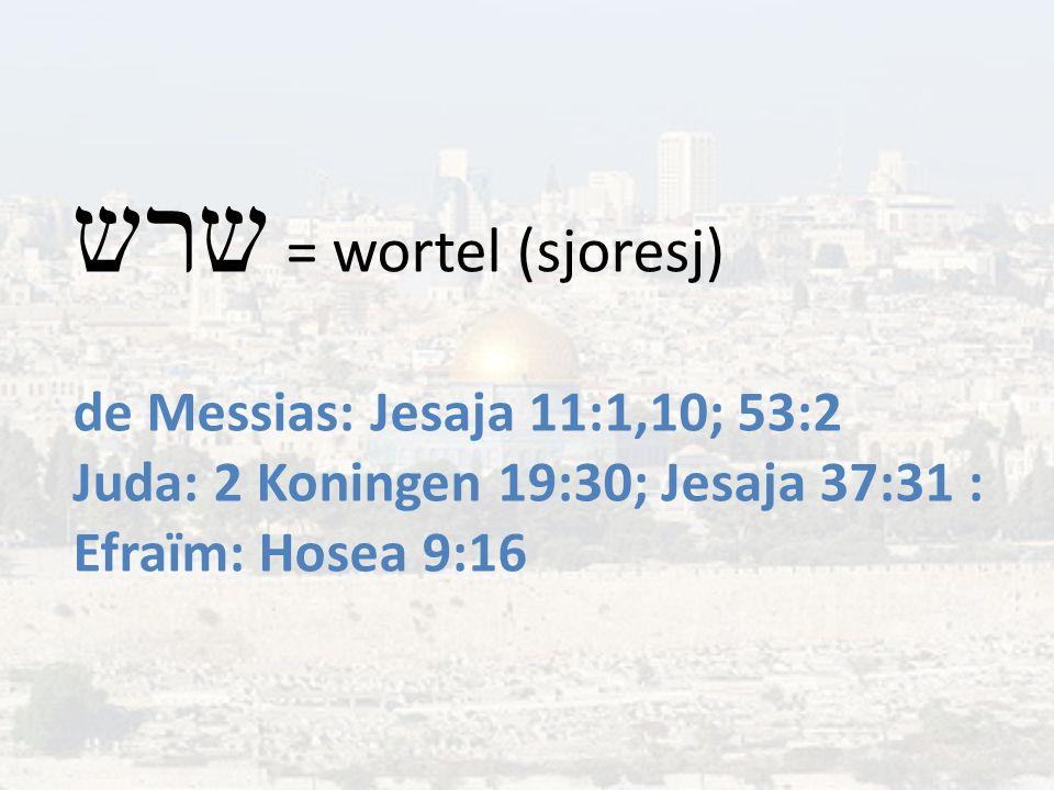 שרש = wortel (sjoresj) de Messias: Jesaja 11:1,10; 53:2 Juda: 2 Koningen 19:30; Jesaja 37:31 : Efraïm: Hosea 9:16