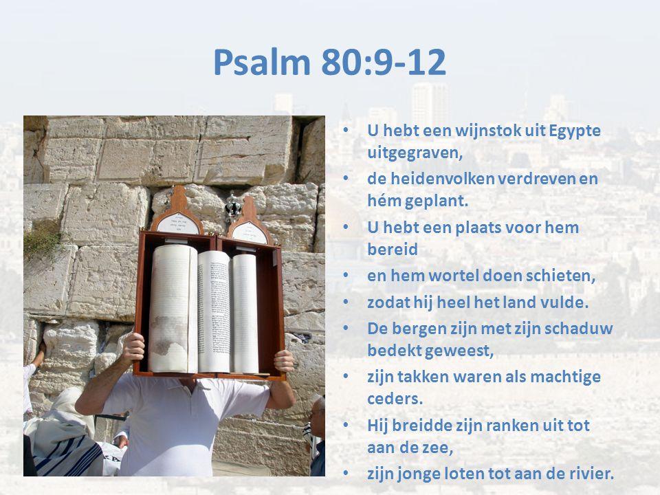 Psalm 80:9-12 U hebt een wijnstok uit Egypte uitgegraven, de heidenvolken verdreven en hém geplant. U hebt een plaats voor hem bereid en hem wortel do