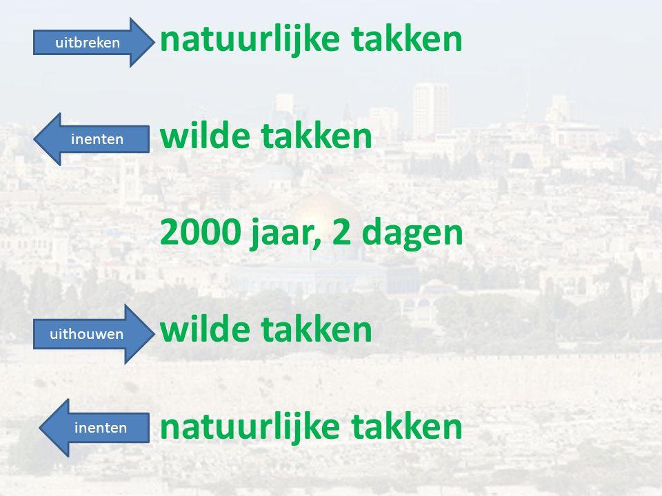 natuurlijke takken wilde takken 2000 jaar, 2 dagen wilde takken natuurlijke takken uitbreken uithouwen inenten