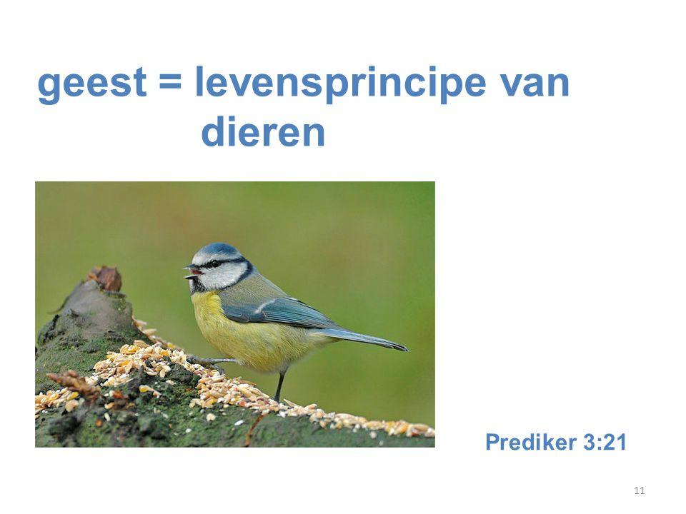 11 geest = levensprincipe van dieren Prediker 3:21