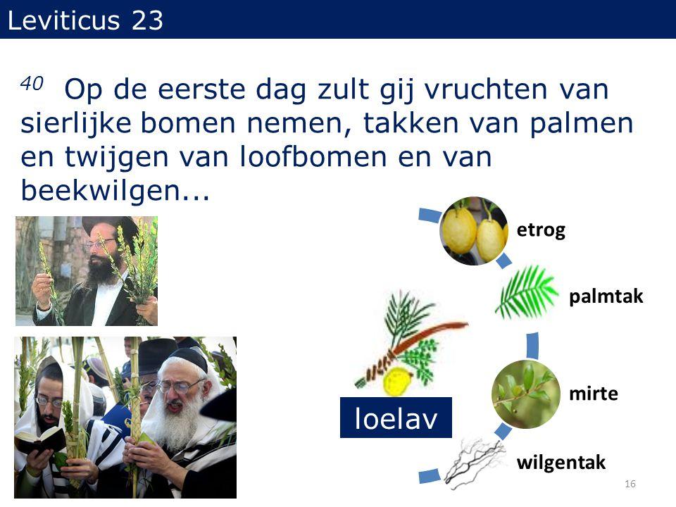 Leviticus 23 40 Op de eerste dag zult gij vruchten van sierlijke bomen nemen, takken van palmen en twijgen van loofbomen en van beekwilgen...