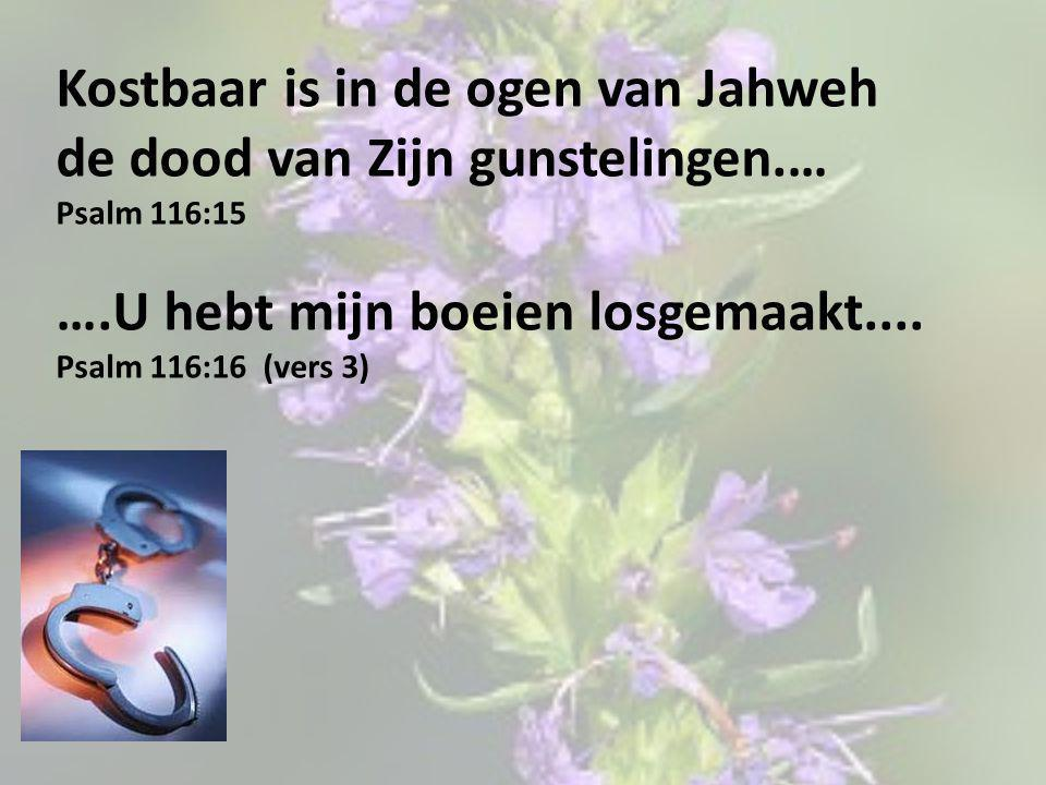 Kostbaar is in de ogen van Jahweh de dood van Zijn gunstelingen.… Psalm 116:15 ….U hebt mijn boeien losgemaakt.... Psalm 116:16 (vers 3)