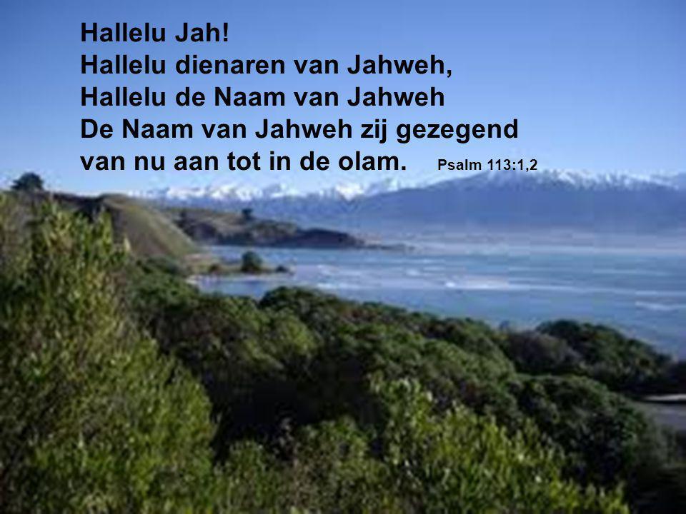 Hallelu Jah! Hallelu dienaren van Jahweh, Hallelu de Naam van Jahweh De Naam van Jahweh zij gezegend van nu aan tot in de olam. Psalm 113:1,2